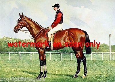 1911~ British Thoroughbred Race Horse~Diamond Jubilee~Jockey~NEW Lge Note Cards