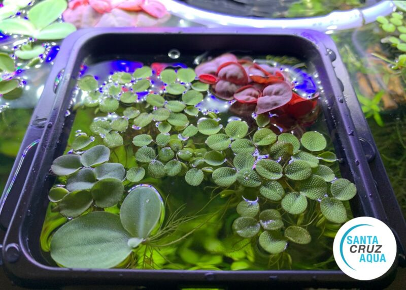 Floating Plant and Feeding Ring USA Seller - Fish Feeder - Suction Cup Ring