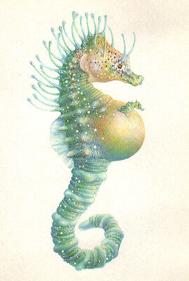Ocean Shorthead Seahorse Giving Birth Original Signd Medium Handworked Art Print