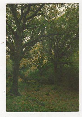 Killarney National Park Tomies Oakwood Ireland Postcard 911a