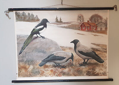 Elster Crow Nils Tiren Role Map School Map Schulwandkarte1928 Sweden