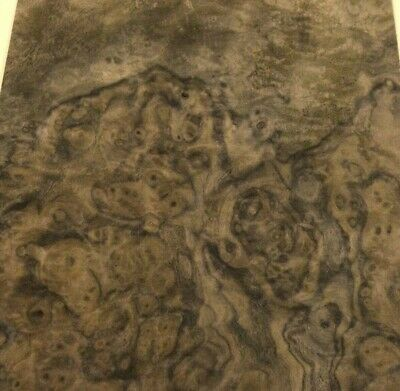 Walnut Burl Wood Veneer 6 X 9 Raw No Backer Aaa Grade Quality 142 Thick