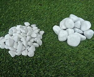 Ciottoli siena bianchi sassi pietre arredo giardino for Ciottoli bianchi