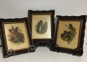 3 Vtg Framed Art Prints by John W.Gould~Produced by HBS Henry B Sandler Co~BIRDS
