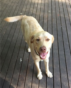 Dogs Free To Good Home Gumtree Newcastle