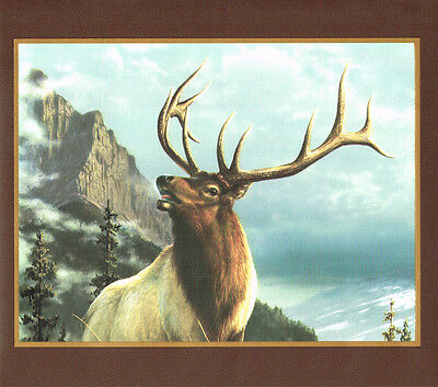ROCKY MOUNTAIN BIG HORN SHEEP MOOSE AND ELK IN FRAMES  Wallpaper Wall bordeR