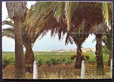 Seppelt Winery Vineyards Barossa Valley SA Postcard (P250)
