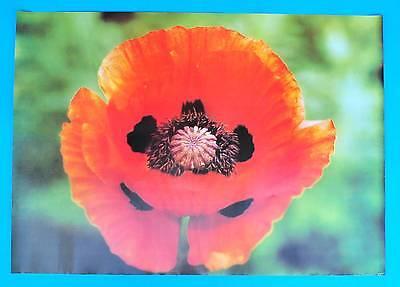 DDR Plakat Poster 1340 | Klatschmohn 1987 Papaver rhoeas | 81 x 58 cm Original
