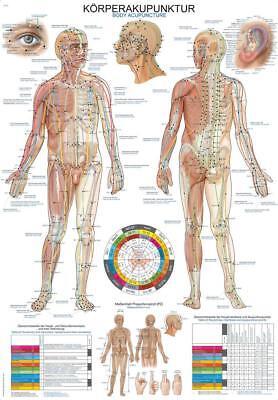 Akupunkturtafel (ERLER-ZIMMER Lehrtafel mit Beleistung Kunstdruck Anatomische Körperakupunktur)