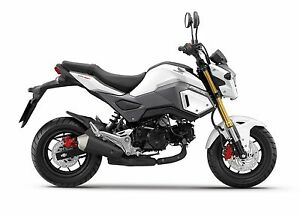 Looking for a Honda Grom