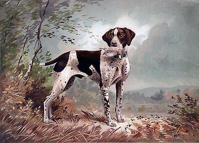 """English Pointer, Bird Dog, antique Art, Herman Brencke, 1879, 24""""x18"""" Canvas Art"""