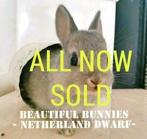 Maitland Area Nsw Rabbits Gumtree Australia Free Local