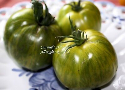 Aunt Ruby German Green Heirloom Tomato Seeds Non GMO Beefsteak Kiwi Green Slicer