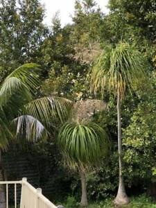 Various palms & Agave plants Tuggerah Wyong Area Preview