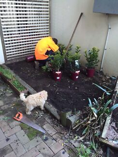 LANDSCAPING,MOWING,HEDGING,TRIMMING,  GARDEN CLEAN OUTS Ryde Ryde Area Preview
