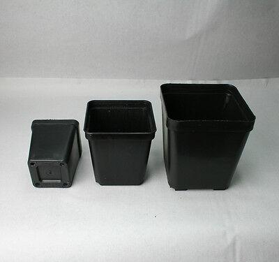 mentöpfe, 7x7x8 cm, Kunststoff-Vierkantcontainer, 25 Stück (Kunststoff-töpfe)
