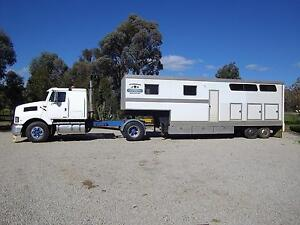 Attarddowns Horse Transport To & From Lurg Benalla Area Preview