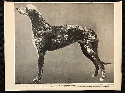 "Original 1934 Dog Print / Bookplate - DEERHOUND, Champion ""St. Roman's Rhyme"""