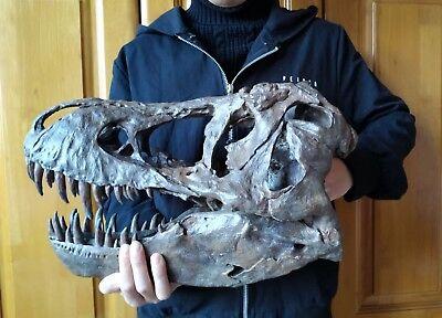 NEW, 38CM,Dinosaur model / T-REX Skull Small Model DB-H1811 for sale  China