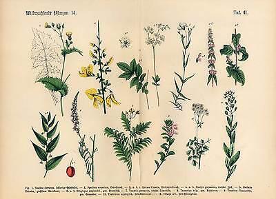 Blumen - Pflanzen - große Lithographie 1869 Altkoloriert