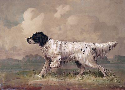 "English Setter, Bird Dog, antique Art, H. Brencke, 1877, 24""x18"" Art Print"