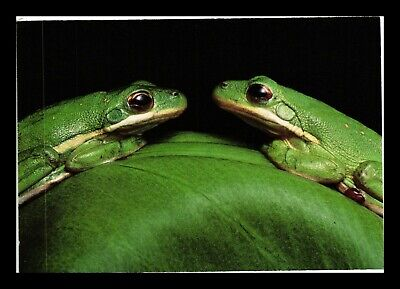 DR JIM STAMPS US TREE FROG NATIONAL AUDUBON SOCIETY CONTINENTAL SIZE POSTCARD