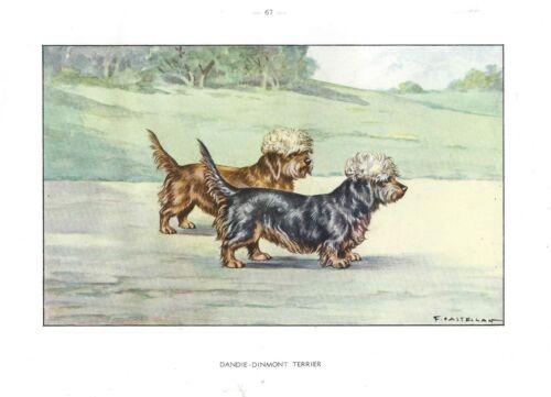 1930 Art Watercolor Francois Castellan France Dog Print DANDIE DINMONT TERRIER