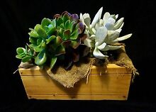 TERRARIUMS, GIFTED PLANTERS and a variety of POTTED PLANTS Huntfield Heights Morphett Vale Area Preview