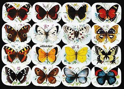 # GLANZBILDER # Krüger 171-287_288 Schmetterlinge vierckig, wie 98-140, selten