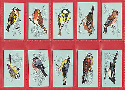 TETLEY  TEA  -  RARE  SET  OF  48  BRITISH  BIRDS  CARDS  -  1970