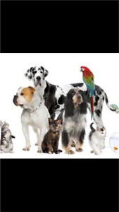 Animal Sitting/Walking Services-Logan, Redlands Brisbane areas Cornubia Logan Area Preview