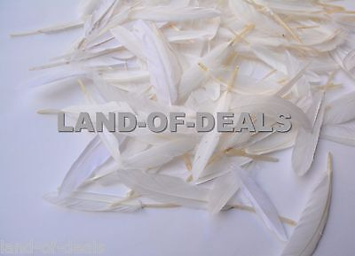 500 Natural White duck feathers, small loose duck feathers hand selected bulk - Bulk Feathers