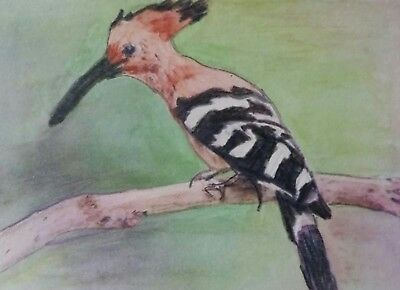 Aceo Art Card 2.5 x 3.5 inch Hoopoe Nature Watercolour Pencil Painting