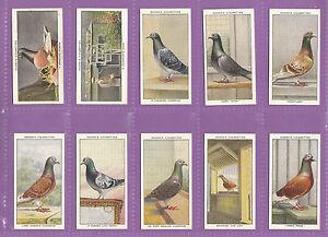 BIRDS  -  OGDENS  LTD. - VERY RARE SET  OF  50  RACING  PIGEONS  CARDS  -  1931
