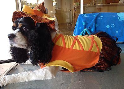 NWT Martha Stewart Halloween Witch Dress Dog XS