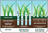 LAWN AERATION - OVERSEEDING EXISTING LAWN