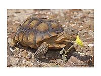 female horsefield tortoise with full house set up/lights & toys for sale