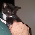 Adopt Eclipse - $80 - All vet work done Redcliffe Redcliffe Area Preview