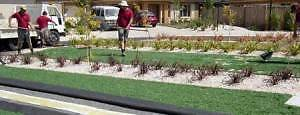 A1 Ground Cover Deeragun Townsville Surrounds Preview