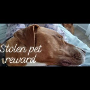 Give Away In Adelaide Region Sa Pets Gumtree Australia Free Local Classifieds