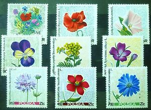 POLAND STAMPS MNH Fi1634-42 Sc1522-30 Mi1781-89 - Wildflowers, 1967, clean - <span itemprop=availableAtOrFrom>Reda, Polska</span> - POLAND STAMPS MNH Fi1634-42 Sc1522-30 Mi1781-89 - Wildflowers, 1967, clean - Reda, Polska