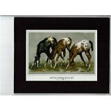 APPALOOSA BALLET, C. Marcus Stone, 8X10 Matted art print, $14.99, APHC Horses