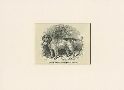 OTTERHOUND ORIGINAL ANTIQUE 1887  OLD NAMED DOG PRINT READY MOUNTED TO FRAME
