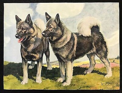 Original 1934 Colour Dog Print / Bookplate - ELKHOUNDS, Nina Scott-Langley