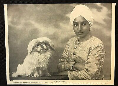 "1934 Dog Print / Bookplate - PEKINGESE, Pratap Singh & ""Sun Chi of Greystones"""