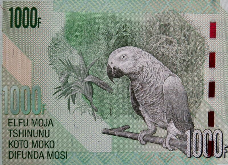 AFRICAN GREY PARROT 2013 CONGO 1000 Francs Banknote Africa Money Uncirculated