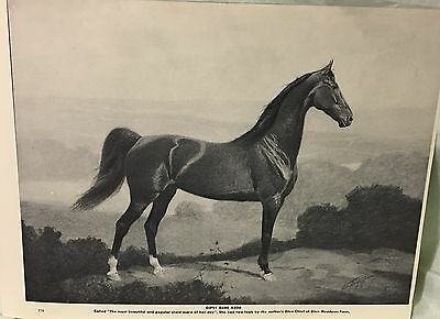 VINTAGE PRINT GIPSY DARE SHOW MARE GEORGE FORD MORRIS 1952 PORTRAITURE OF HORSE