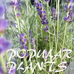 POPULAR PLANTS