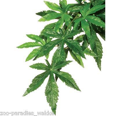 Exo Terra Seidenpflanze mittel - Regenwaldpflanze ABUTILON  für Terrarium PT3042