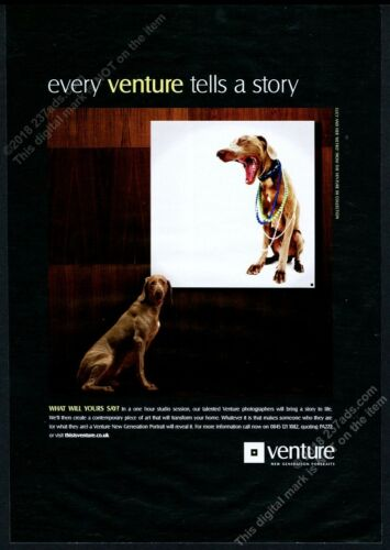 2008 Vizsla dog photo Venture Portraits London vintage print ad